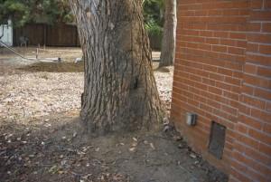 Foundation Wall Damage